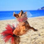 Kırmızı Puantiyeli Köpek Tütüsü & Tasma Aksesuarları